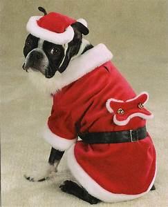 Line Dogs Chart Santa Paws Dog Costume Dog Costume At Kooldawgtees