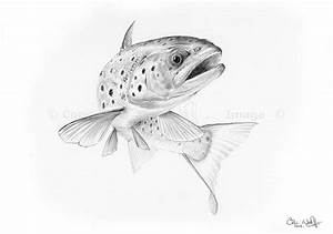 speckled trout outline - Google Search | Tatoos ...