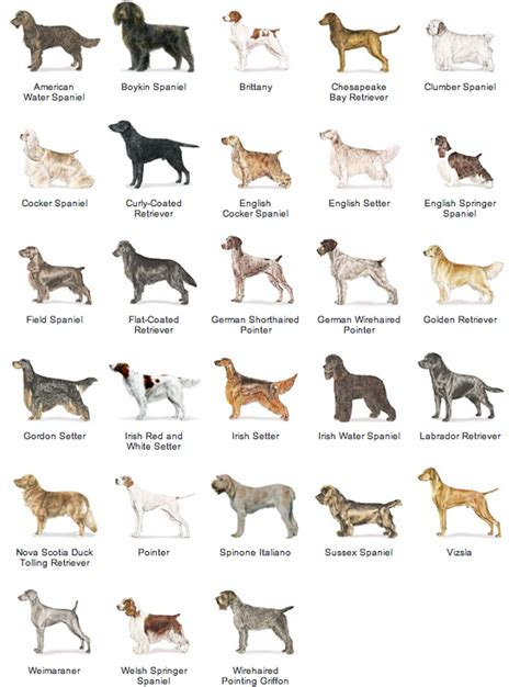 large non shedding dogs list non shedding breeds breeds