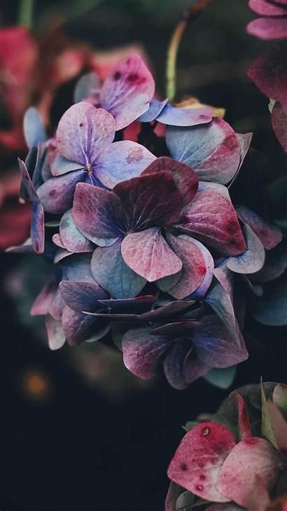 Flower Iphone Dark Flowers Rainbow Plus Papers