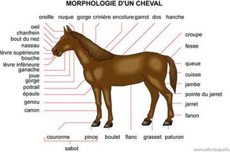 monter comme un cheval la morphologie du cheval destin 233 aux passionn 233 s des