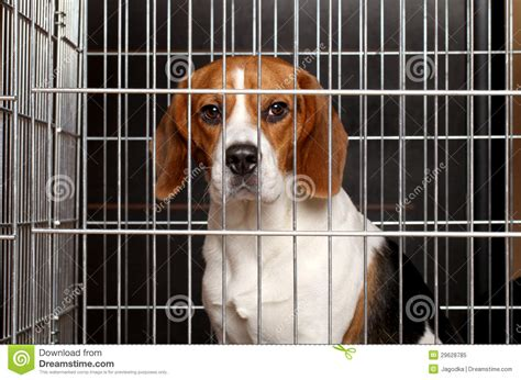 pet crate in a cage royalty free stock photo image 29628785