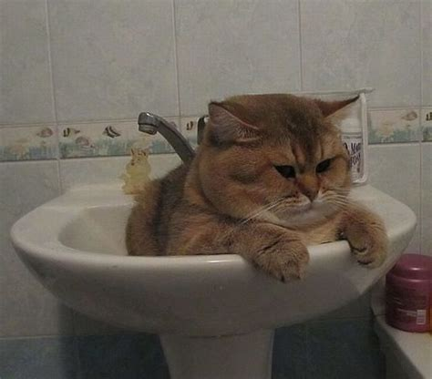funny animals   pics funnycom