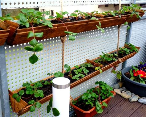 Container Gardening  Diy Strawberry Planter Easy And