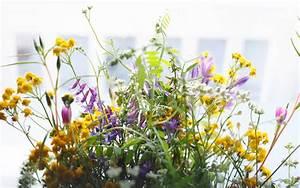 Wie Oft Blumen Gießen : fairtrade blumen und bio blumen der bessere blumenstrau ~ Orissabook.com Haus und Dekorationen
