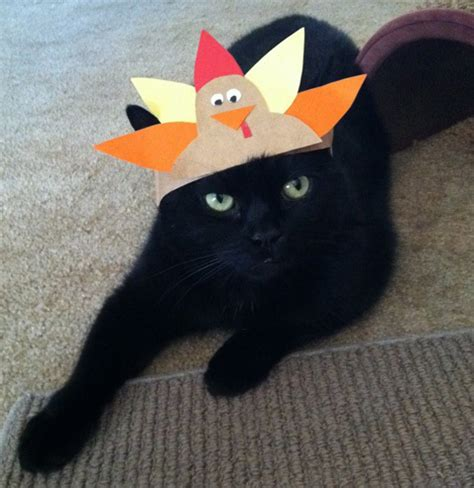 thanksgiving cat here are 40 animals who are more ready for thanksgiving