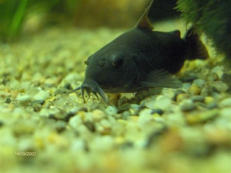 aquarium poisson de fond concours photo poissons de fond