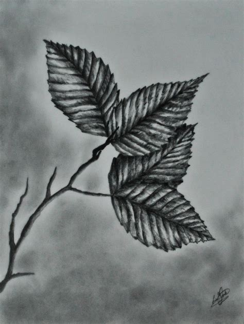 gallery   draw realistic leaves drawings art gallery