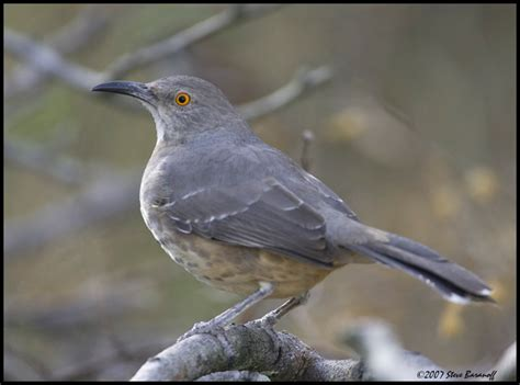top 28 birds unlimited tucson wild birds unlimited