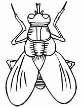 Insect Coloring Pewarnaan Fly Pewarna Halaman Serangga sketch template