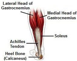 The bottom leg will be the one being worked on common leg injuries of long distance runners: Gastrocnemius Muscle: Anatomy & Injuries - Foot Pain Explored