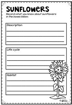sunflower life cycle activities  worksheets tpt