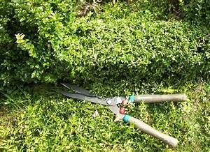 Wann Wird Lavendel Geschnitten : buchsbaum schneiden starker r ckschnitt im april ~ Lizthompson.info Haus und Dekorationen