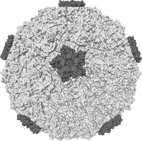 acute viral nasopharyngitis common cold wikidoc