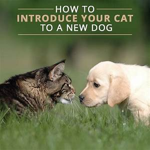 best 25 dog cat ideas on pinterest cute dogs and cats With how to introduce a new dog to an aggressive dog