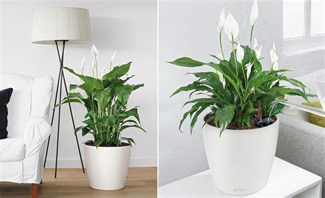 Große Pflanze Wohnzimmer wohnzimmerambiente durch pflanzen aufwerten
