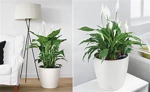 Pflanzen Wohnzimmer Feng Shui : wohnzimmerambiente durch pflanzen aufwerten ~ Bigdaddyawards.com Haus und Dekorationen