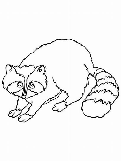 Raccoon Coloring Pages Printable Sheet Sheets Animals