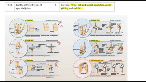 1.1.10 Types Of Synovial Joints