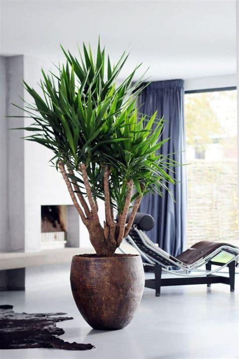 yucca plante interieur ou exterieur les 25 meilleures id 233 es de la cat 233 gorie plante d int 233 rieur sur plantes plantes d