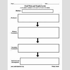Graphic Organizer For Food Chain  Science  Pinterest  Food Chains, Graphic Organizers And Forests