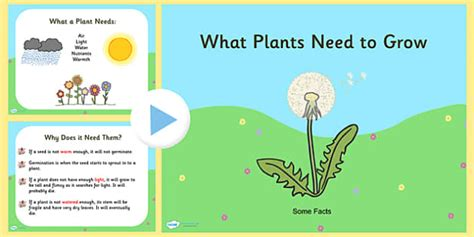 what do plants need to grow worksheet ks1 what plants need to grow powerpoint plants living things