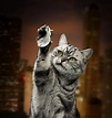 45 Scary Cute Cat Pictures