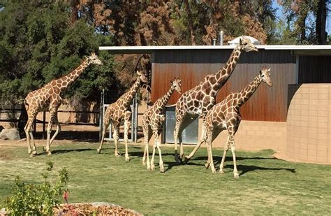 fresno zoo day trip california central valley attractions