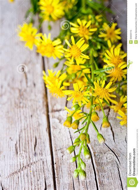 wild yellow flowers royalty  stock photo image