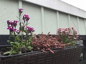 Vertikaler Garten Kaufen : vertikaler garten auf palette garten palette t ~ Watch28wear.com Haus und Dekorationen