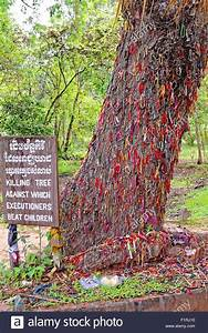 Blaukorn Baum Töten : t ten von baum t tungfelder phnom penh kambodscha tod ~ Lizthompson.info Haus und Dekorationen