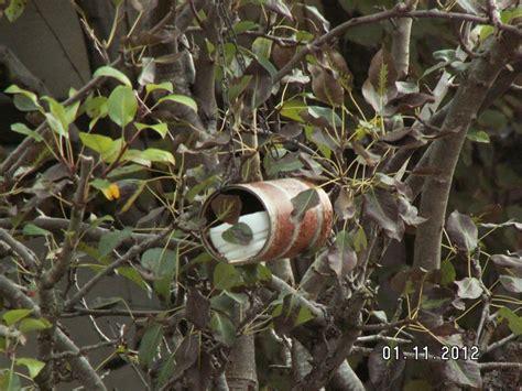mangeoires pour oiseaux cet hiver les jardiniers associ 233 s