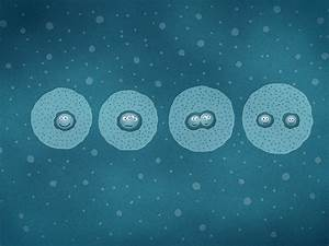 Cell Division · Desktop wallpapers · Vladstudio