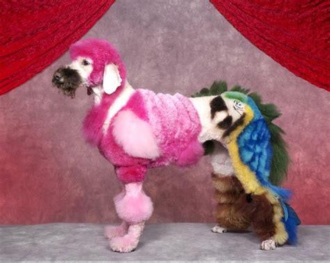 amazing dog grooming xcitefunnet