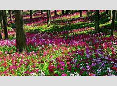 Flower Garden Wallpapers Wallpaper Cave