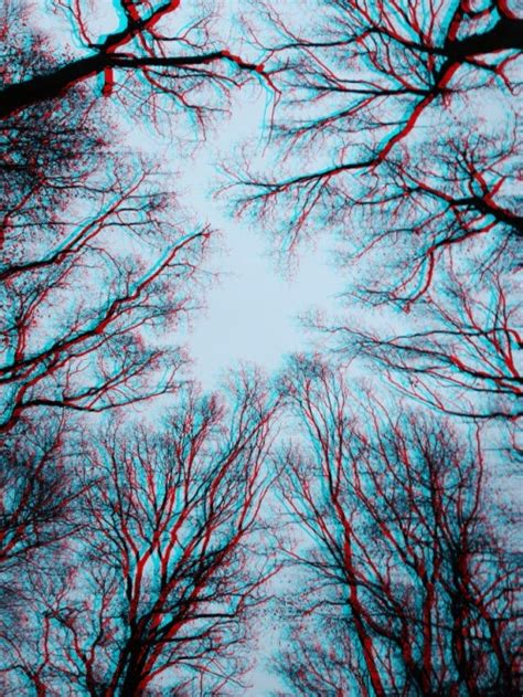 Psychedelic Forest Tumblr