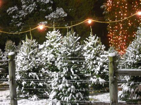 best nc christmas tree farm best 25 fraser fir tree ideas on balsam fir tree fraser fir