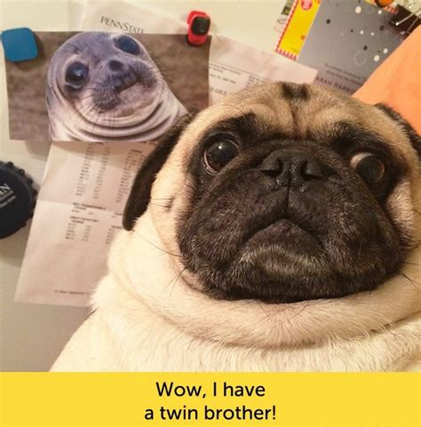 dogs  funny facial expressions dogexpress