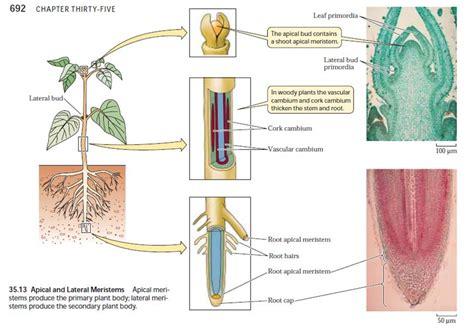 plant tissues biologyisc