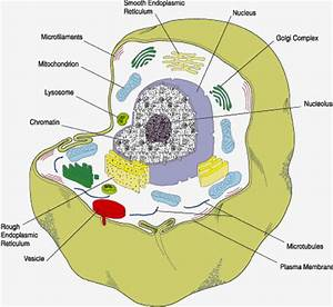 1 4  Eucaryotic Cell Structure