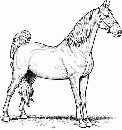 Horse Breeds Fun Coloring Mare Coloringpage