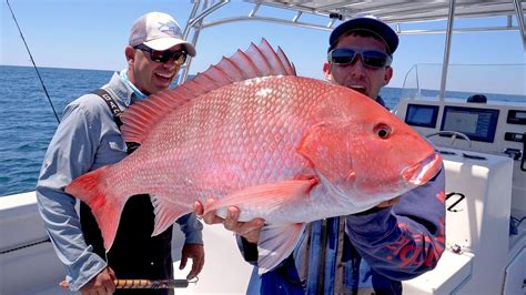 snapper fishing giant cobia monster catch 4k cook