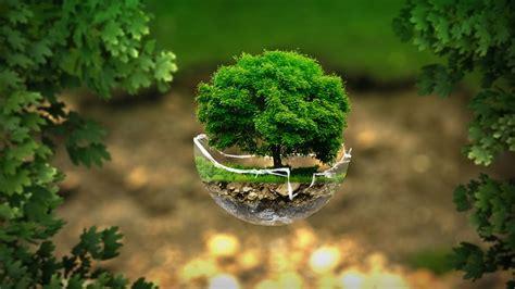photo environment ecology nature  image  pixabay