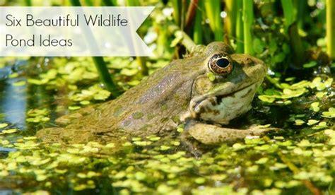 wildlife pond ideas six beautiful exles moral fibres uk eco green