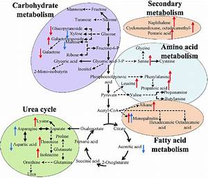 Effects Of Asgo On The Main Metabolic Pathways Of Plant