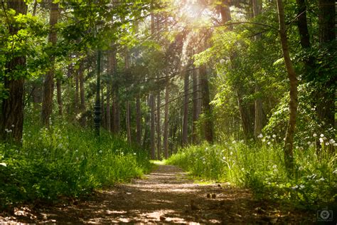 forest sunlight background high quality  backgrounds