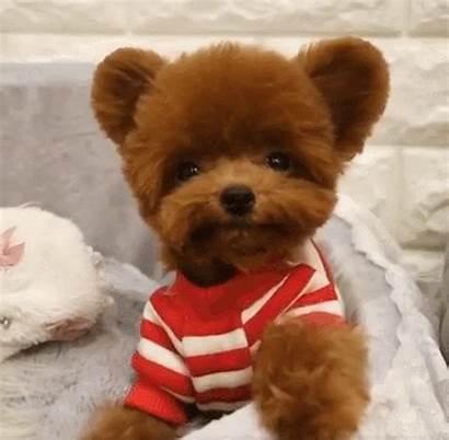 Puppies Puppy Dog Teddy Doggy Bear Dogs