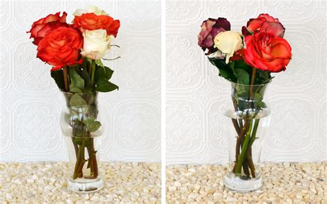 How To Preserve Flowers In A Vase by How To Keep Roses Alive More
