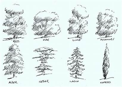 Basic Tree Types Kreslit Jak Zdroj Painters