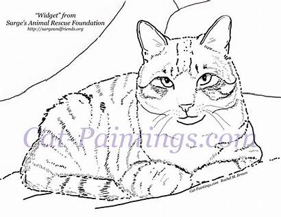 Cat Coloring Calico Tabby Pages Printable Cats
